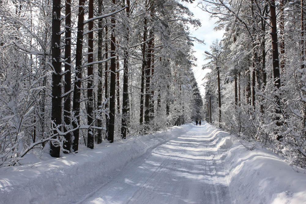 Зимняя вишня киров